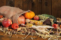 Thanksgiving with jute bag different pumpkins maize cob apples and grain in on straw in front of old weathered wooden board Stock Images