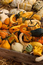 Thanksgiving pumpkins on straw at daylight Royalty Free Stock Images