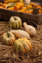 Thanksgiving pumpkins on straw at daylight Stock Image