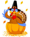Thanksgiving Turkey in the  pumpkin Royalty Free Stock Images