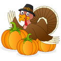 Thanksgiving turkey and pumpkins a funny cartoon with three isolated on white background eps file available Royalty Free Stock Photography