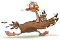 Thanksgiving turkey runs