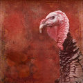 Thanksgiving Turkey Vintage background Royalty Free Stock Photography