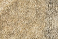 Thatch background Royalty Free Stock Photos