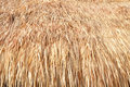 Thatch roof texture from dry hay Stock Image
