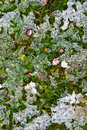Thawing on the green grass with daisys and other flowers Royalty Free Stock Photos