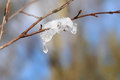 The thawing snow on a branch tree s Royalty Free Stock Image