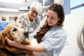 Therapy dog visiting young female patient in hospital with volunteer smiling Stock Image