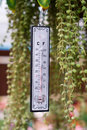Thermometer to measure the temperature afforded in the garden hanging on the branches Stock Images