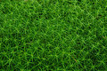 Thick green moss in the forest texture Stock Images