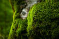Thick moss Stock Photo