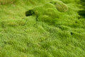 Thick soft green grass Stock Photo