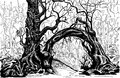 Thicket felled trees drawing black and white Stock Images