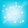 Thin branches with white flowers on sky background Royalty Free Stock Photo