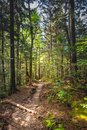 Thin Dirt Trail Through Smokies Forest Royalty Free Stock Photo