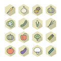 Thin line icons for vegetables vector eps Stock Photo