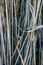 Thin organic sticks lying outdoors. Rustic background from tree branches Royalty Free Stock Photo