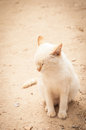 Thinking cat white with closed eyes Royalty Free Stock Images