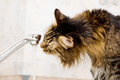 Thirst cat drinks water from the tap Stock Photography