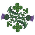 Thistle and Clover. The symbols of Ireland and Scotland. Twisted clover and Thistle Royalty Free Stock Photo