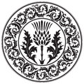 Thistle flower and ornament round leaf thistle. The Symbol Of Scotland Royalty Free Stock Photo