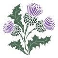 Thistle. Onopordum acanthium. Scottish Thistle Royalty Free Stock Photo