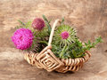 Thistles in the basket Stock Photography