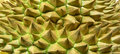 Thorns of durian background Royalty Free Stock Photo