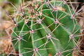 Thorny barrel cactus plant part Stock Photo