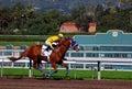 Thoroughbred Horse Racing Stock Photo