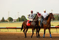 Thoroughbred race horse a is led out just before the Stock Image