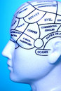 Thought Brain Head Memory  Stock Image
