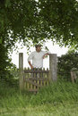 Thoughtful man standing across field gate under the tree Stock Image