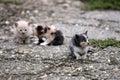 Three abandoned kittens Royalty Free Stock Photo