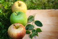 Three apples appleson wood in the garden Royalty Free Stock Images