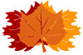 Three Autumn Leaves Royalty Free Stock Photo