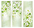 Three banners with blossoming tree branches vector illustration Stock Image