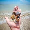 Three Beautiful Marine Shells ...
