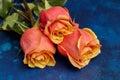 Three beautiful orange roses on blue background