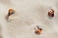Three Beautiful Sea Shells On ...