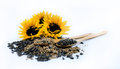 Three beautiful sunflowers and black seeds with two wooden spoons Royalty Free Stock Photo