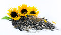 Three beautiful sunflowers and black seeds on a white background Royalty Free Stock Photo
