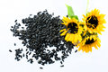 Three beautiful sunflowers and black seeds on a white background - top view Royalty Free Stock Photo