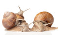 Three big snails