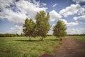 Three birch trees at the tempelhofer feld berlin germany Royalty Free Stock Photos