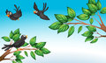 Three birds at the forest illustration of Royalty Free Stock Photo