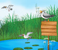 Three birds at the pond with a signboard illustration of Royalty Free Stock Image