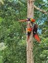 Three birds in a tree Royalty Free Stock Photo