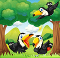 Three black birds at the forest illustration of Royalty Free Stock Photography