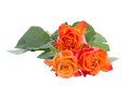 Three blooming orange roses isolated on white background Royalty Free Stock Photos